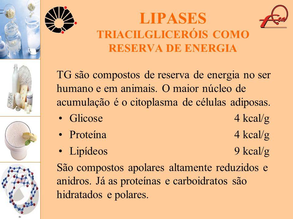 LIPASES TRIACILGLICERÓIS COMO RESERVA DE ENERGIA TG são compostos de reserva de energia no ser humano e em animais. O maior núcleo de acumulação é o c