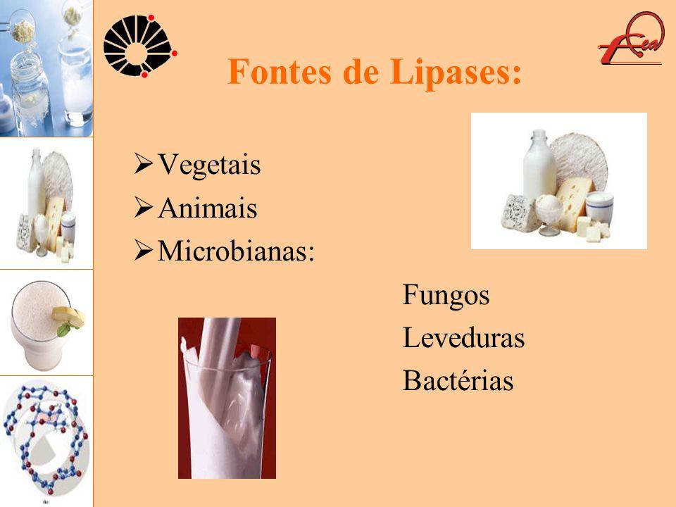 Fontes de Lipases: Vegetais Animais Microbianas: Fungos Leveduras Bactérias