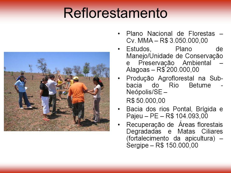 Reflorestamento Plano Nacional de Florestas – Cv.