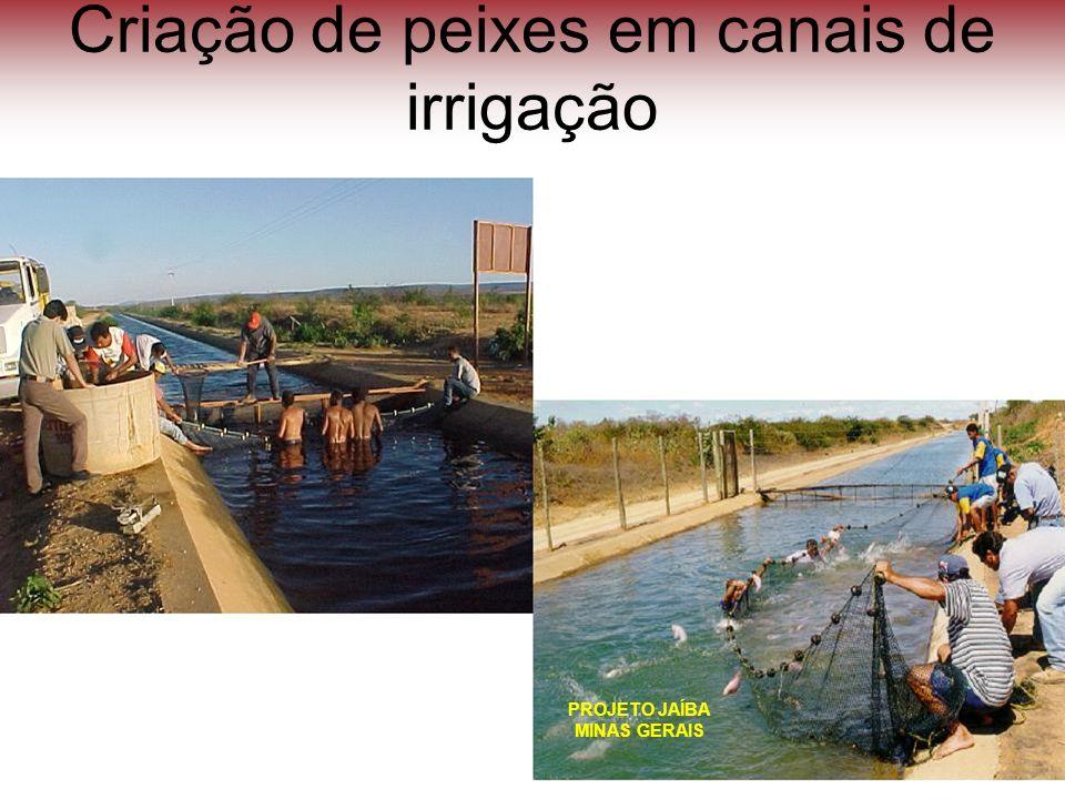 Criação de peixes em canais de irrigação PROJETO JAÍBA MINAS GERAIS