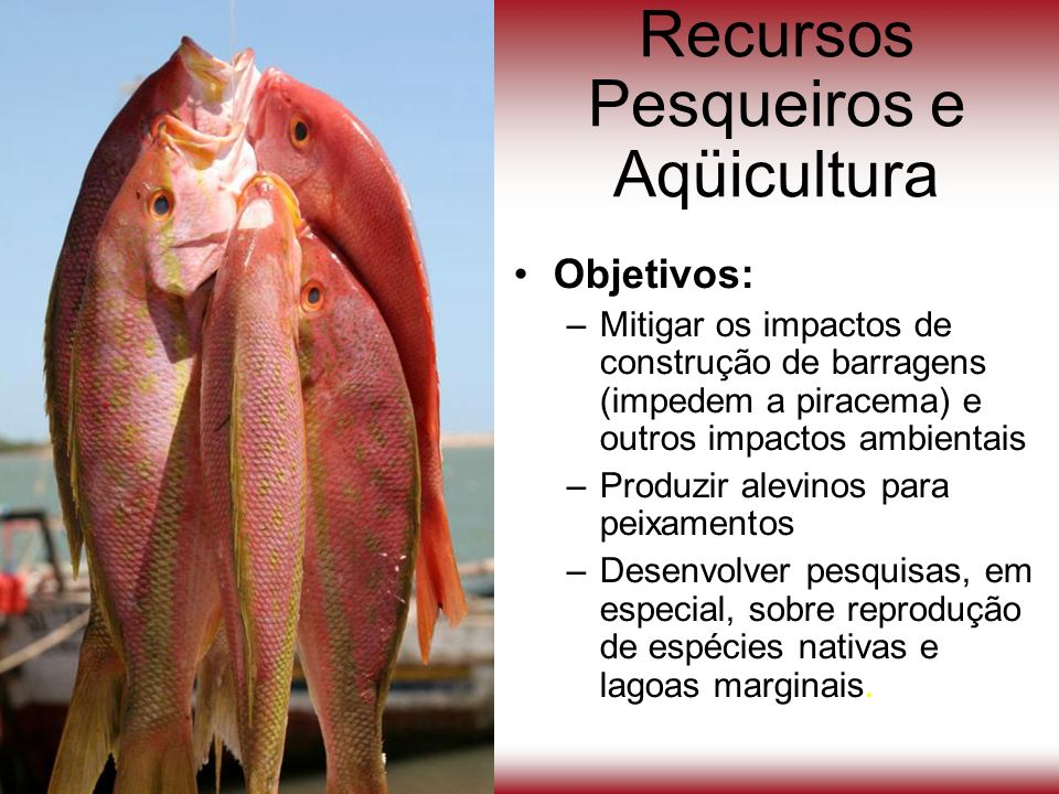 Recursos Pesqueiros e Aqüicultura Objetivos: –Mitigar os impactos de construção de barragens (impedem a piracema) e outros impactos ambientais –Produz