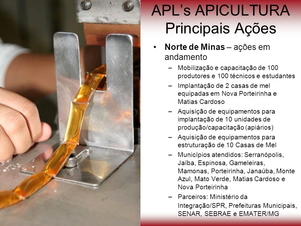 APLs APICULTURA Principais Ações Norte de Minas – ações em andamento –Mobilização e capacitação de 100 produtores e 100 técnicos e estudantes –Implant