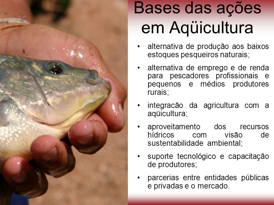 Bases das ações em Aqüicultura alternativa de produção aos baixos estoques pesqueiros naturais; alternativa de emprego e de renda para pescadores prof