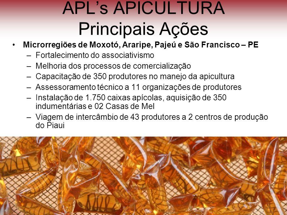 APLs APICULTURA Principais Ações Microrregiões de Moxotó, Araripe, Pajeú e São Francisco – PE –Fortalecimento do associativismo –Melhoria dos processo