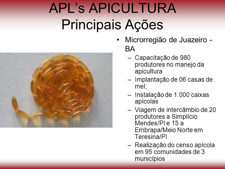 APLs APICULTURA Principais Ações Microrregião de Juazeiro - BA –Capacitação de 980 produtores no manejo da apicultura –Implantação de 06 casas de mel;