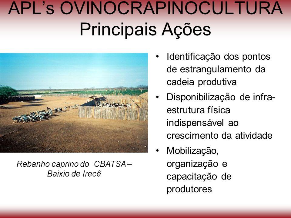 APLs OVINOCRAPINOCULTURA Principais Ações Identificação dos pontos de estrangulamento da cadeia produtiva Disponibilização de infra- estrutura física
