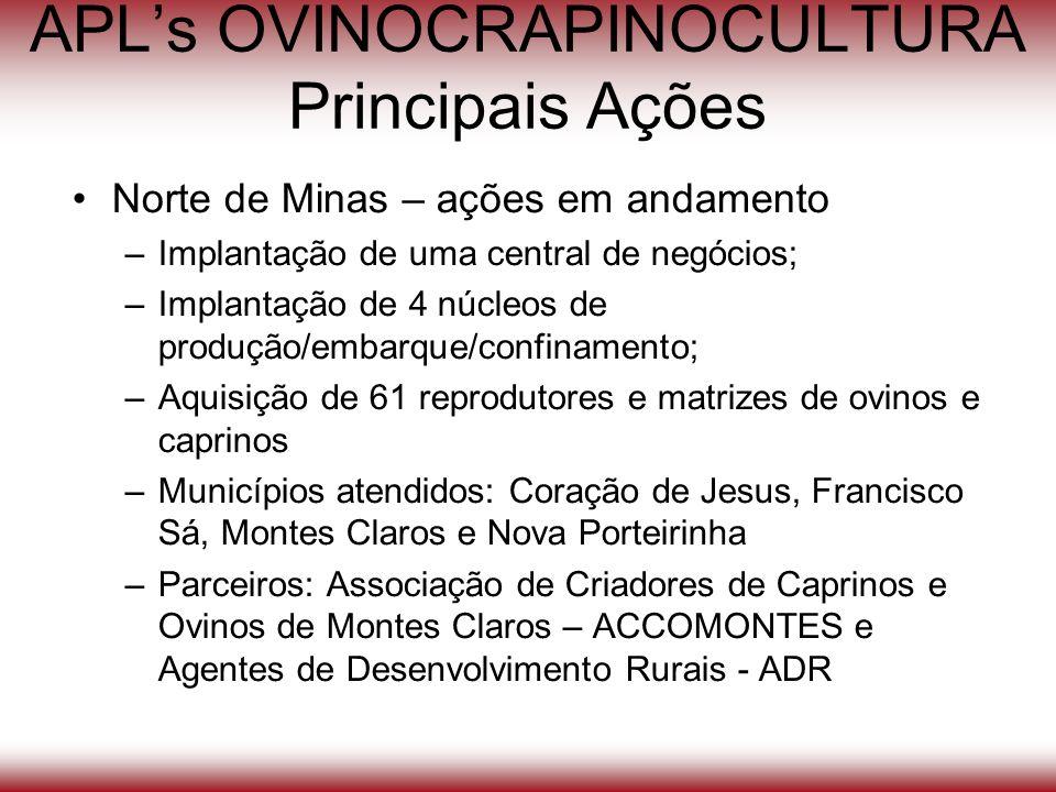 APLs OVINOCRAPINOCULTURA Principais Ações Norte de Minas – ações em andamento –Implantação de uma central de negócios; –Implantação de 4 núcleos de pr