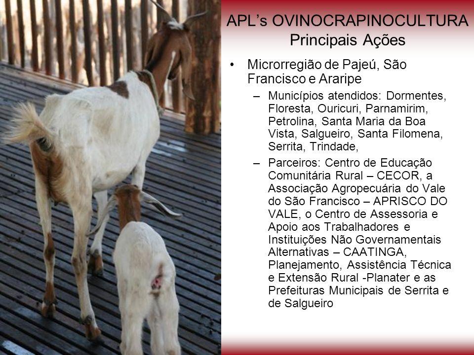 APLs OVINOCRAPINOCULTURA Principais Ações Microrregião de Pajeú, São Francisco e Araripe –Municípios atendidos: Dormentes, Floresta, Ouricuri, Parnami