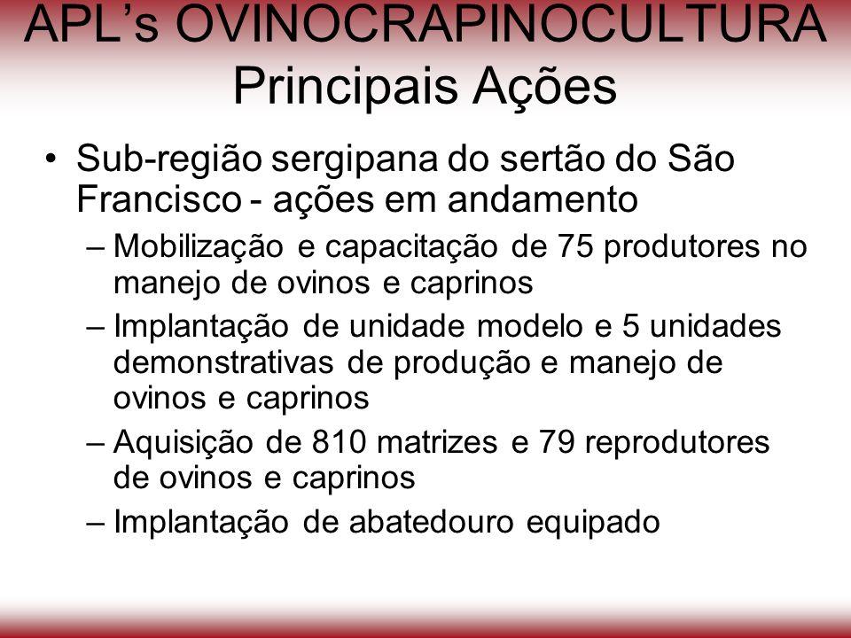 APLs OVINOCRAPINOCULTURA Principais Ações Sub-região sergipana do sertão do São Francisco - ações em andamento –Mobilização e capacitação de 75 produt