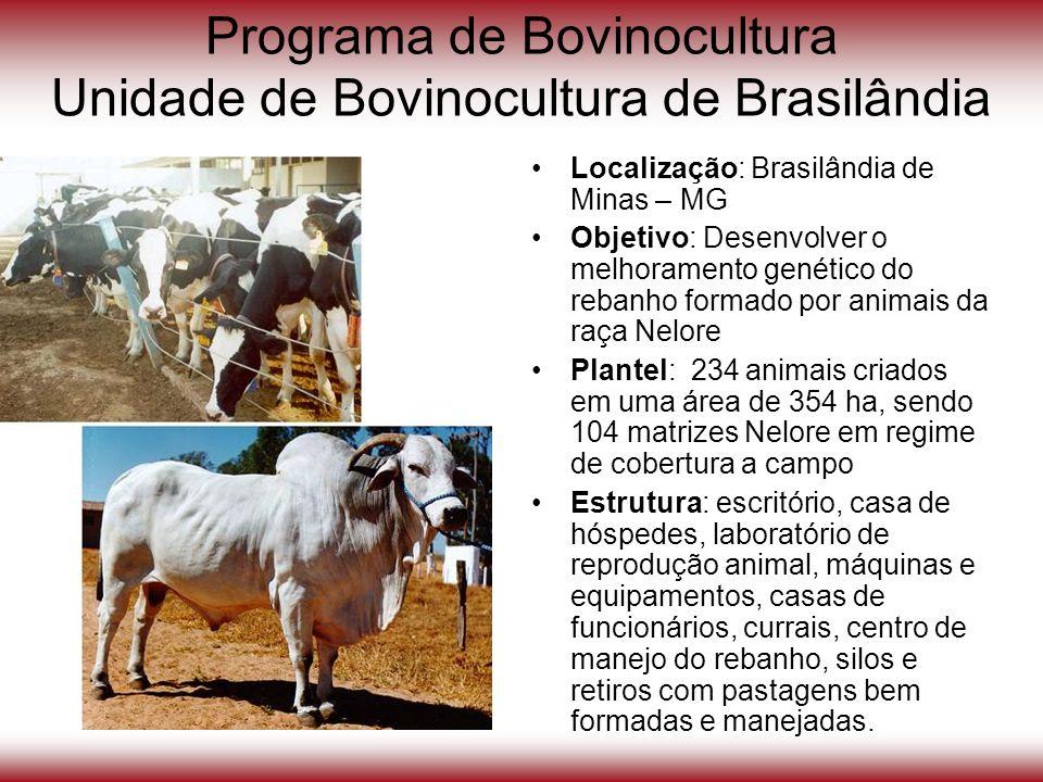 Programa de Bovinocultura Unidade de Bovinocultura de Brasilândia Localização: Brasilândia de Minas – MG Objetivo: Desenvolver o melhoramento genético