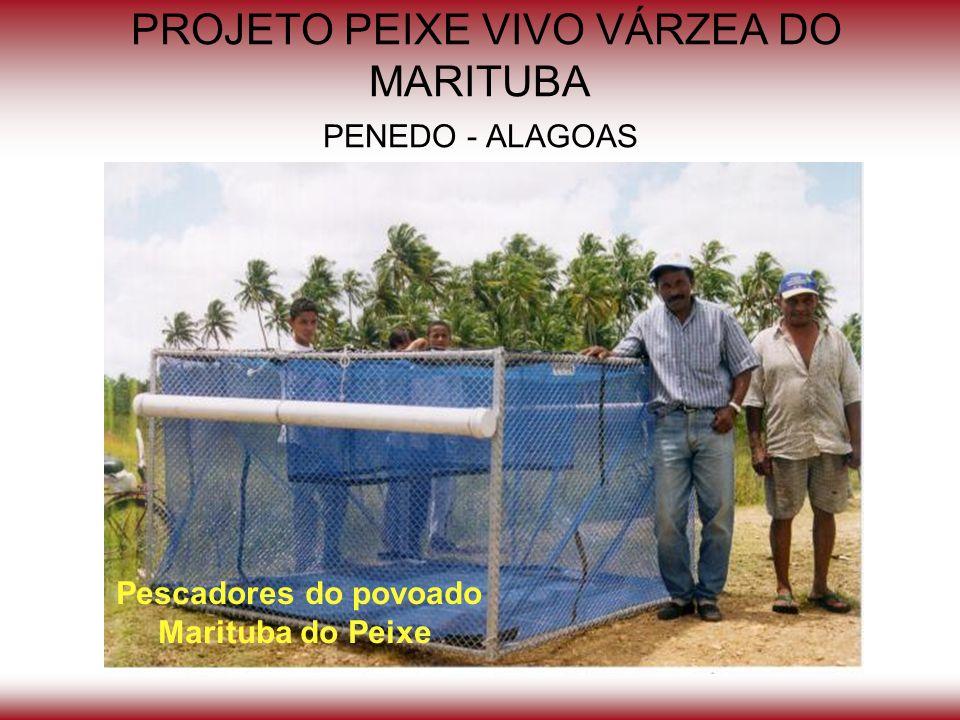 PROJETO PEIXE VIVO VÁRZEA DO MARITUBA PENEDO - ALAGOAS Pescadores do povoado Marituba do Peixe