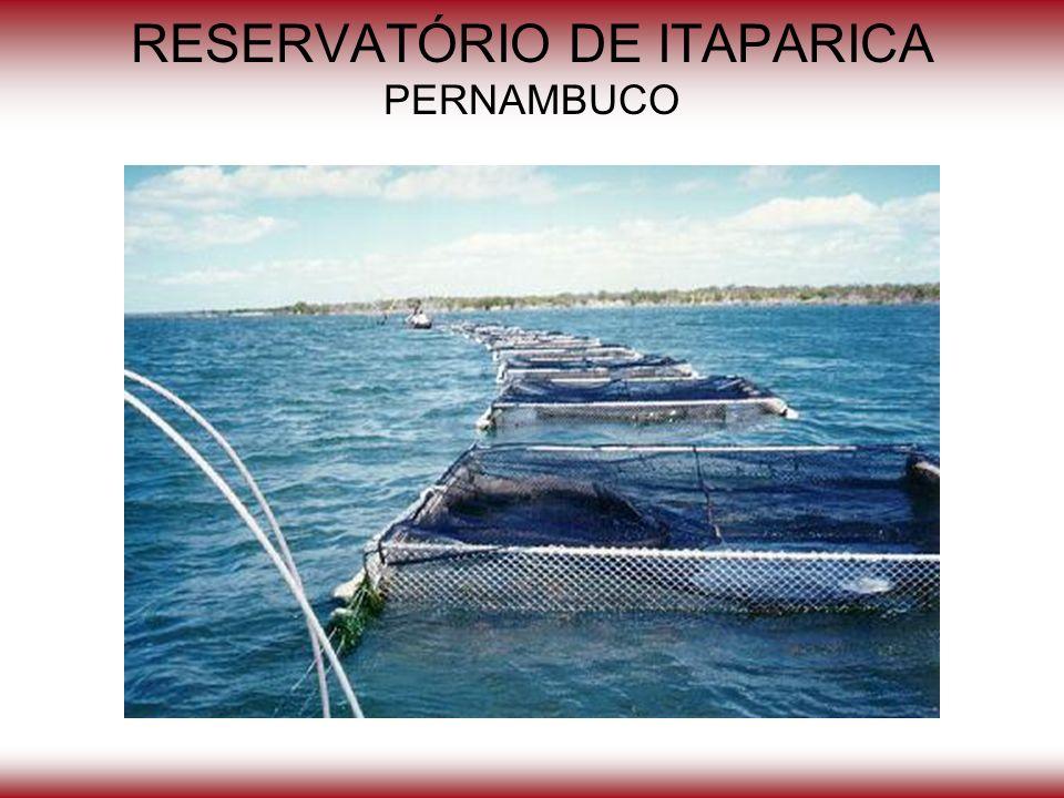 RESERVATÓRIO DE ITAPARICA PERNAMBUCO