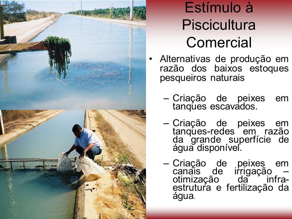 Estímulo à Piscicultura Comercial Alternativas de produção em razão dos baixos estoques pesqueiros naturais –Criação de peixes em tanques escavados. –