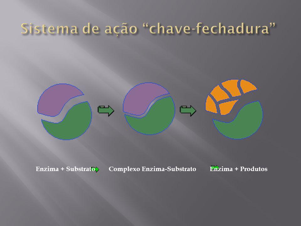 Enzima + Substrato Complexo Enzima-Substrato Enzima + Produtos