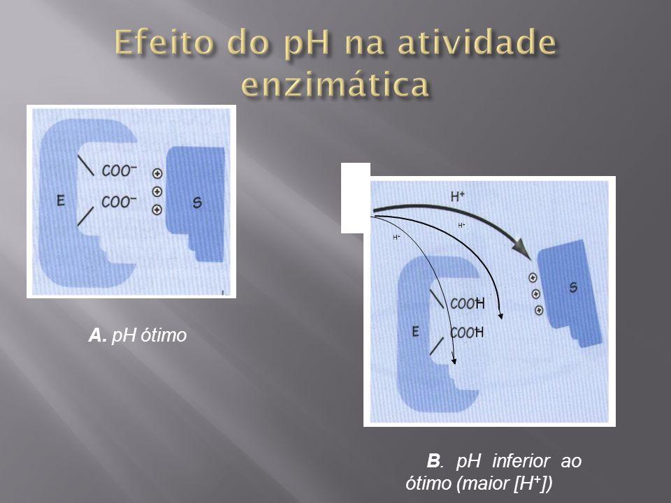 H+H+ H+H+ A. pH ótimo B. pH inferior ao ótimo (maior [H + ])
