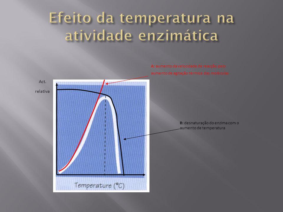 Act. relativa A: aumento da velocidade de reacção pelo aumento de agitação térmica das moléculas B: desnaturação do enzima com o aumento de temperatur