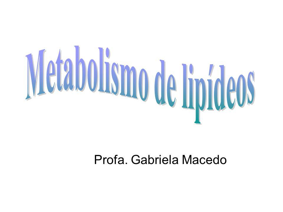 Profa. Gabriela Macedo