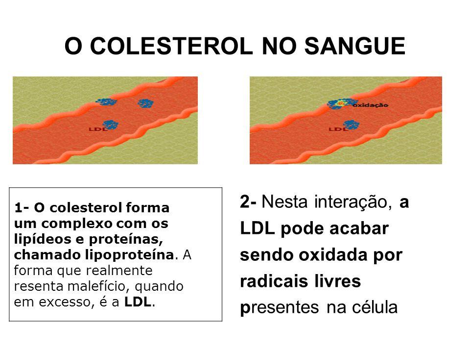O COLESTEROL NO SANGUE 2- Nesta interação, a LDL pode acabar sendo oxidada por radicais livres presentes na célula.