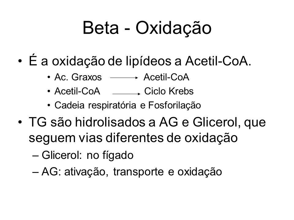 Beta - Oxidação É a oxidação de lipídeos a Acetil-CoA.