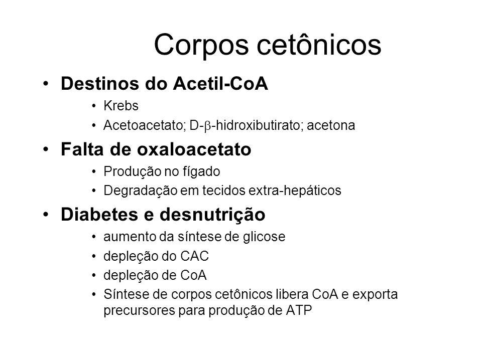 Corpos cetônicos Destinos do Acetil-CoA Krebs Acetoacetato; D- -hidroxibutirato; acetona Falta de oxaloacetato Produção no fígado Degradação em tecidos extra-hepáticos Diabetes e desnutrição aumento da síntese de glicose depleção do CAC depleção de CoA Síntese de corpos cetônicos libera CoA e exporta precursores para produção de ATP