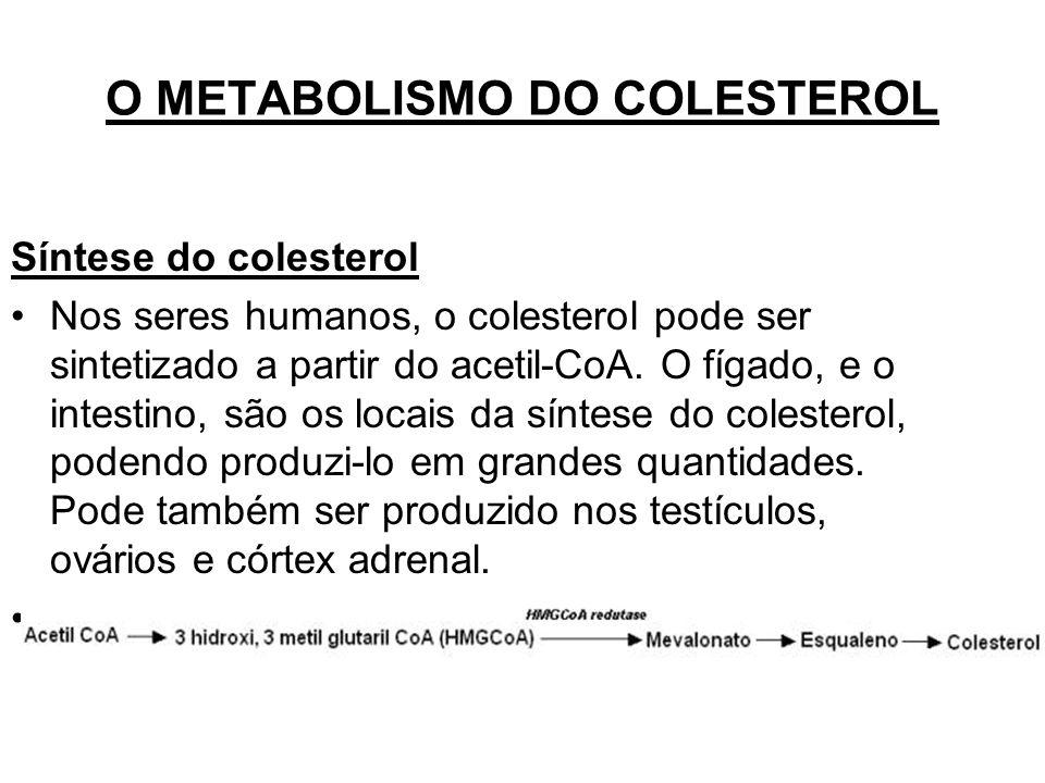 O METABOLISMO DO COLESTEROL Síntese do colesterol Nos seres humanos, o colesterol pode ser sintetizado a partir do acetil-CoA.