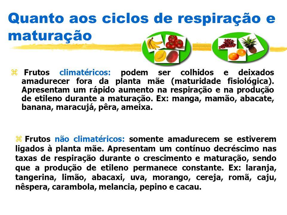 Quanto aos ciclos de respiração e maturação z Frutos climatéricos: podem ser colhidos e deixados amadurecer fora da planta mãe (maturidade fisiológica