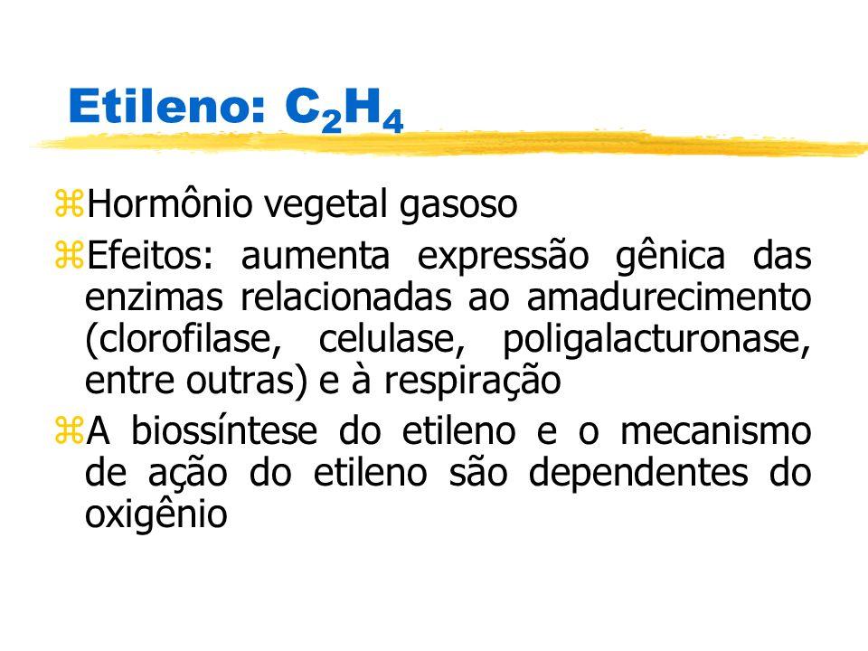 Etileno: C 2 H 4 zHormônio vegetal gasoso zEfeitos: aumenta expressão gênica das enzimas relacionadas ao amadurecimento (clorofilase, celulase, poliga