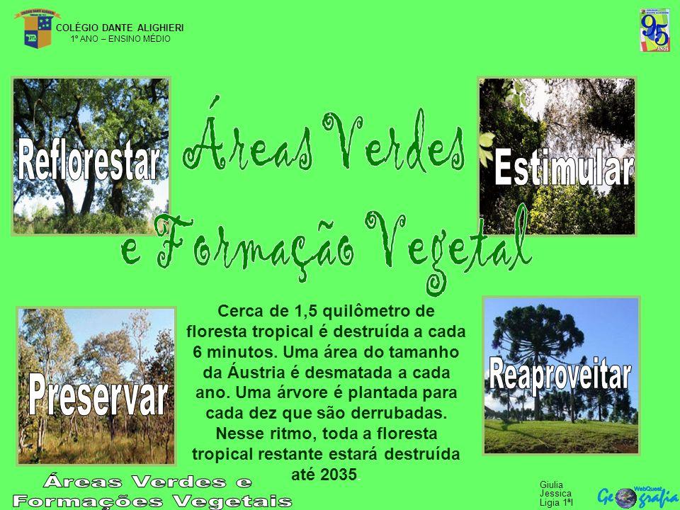 COLÉGIO DANTE ALIGHIERI 1º ANO – ENSINO MÉDIO Giulia Jessica Ligia 1ªI Cerca de 1,5 quilômetro de floresta tropical é destruída a cada 6 minutos.