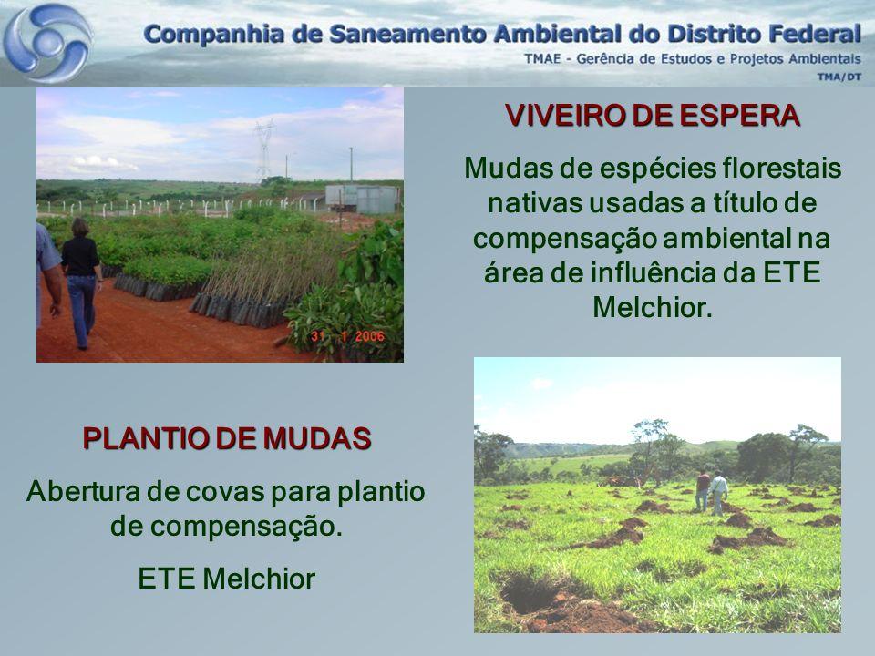 VIVEIRO DE ESPERA Mudas de espécies florestais nativas usadas a título de compensação ambiental na área de influência da ETE Melchior. PLANTIO DE MUDA