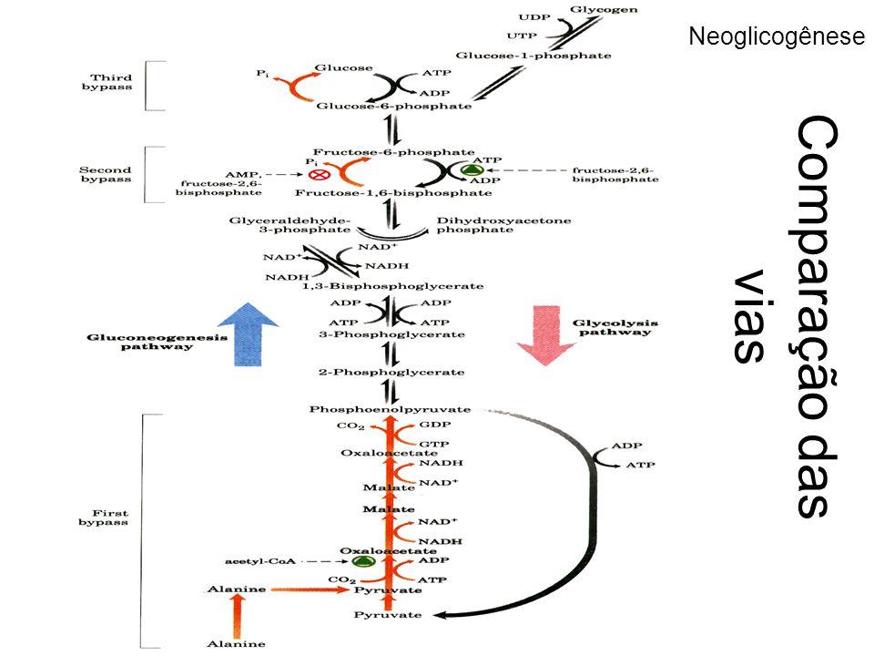 Comparação das vias Neoglicogênese