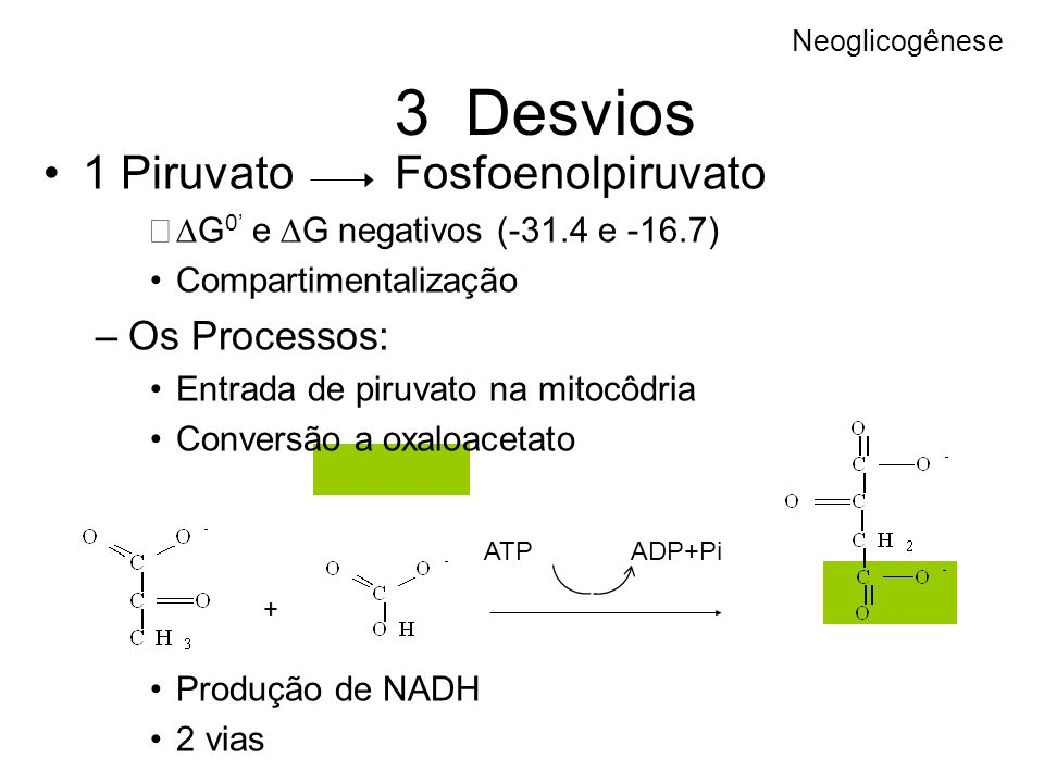 3 Desvios 1 Piruvato Fosfoenolpiruvato G 0 e G negativos (-31.4 e -16.7) Compartimentalização –Os Processos: Entrada de piruvato na mitocôdria Convers