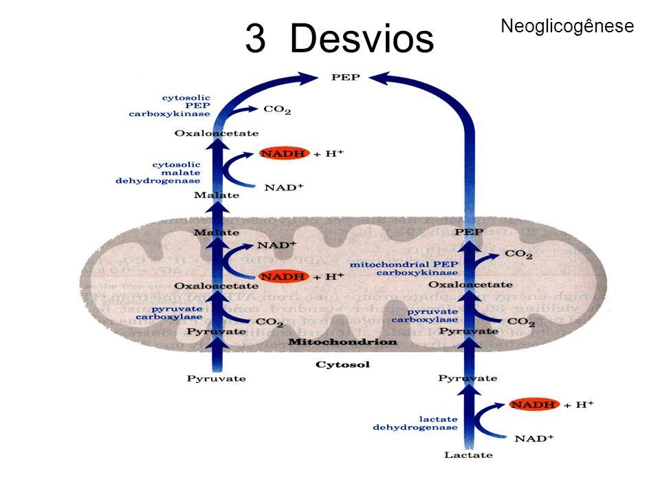 3 Desvios Neoglicogênese