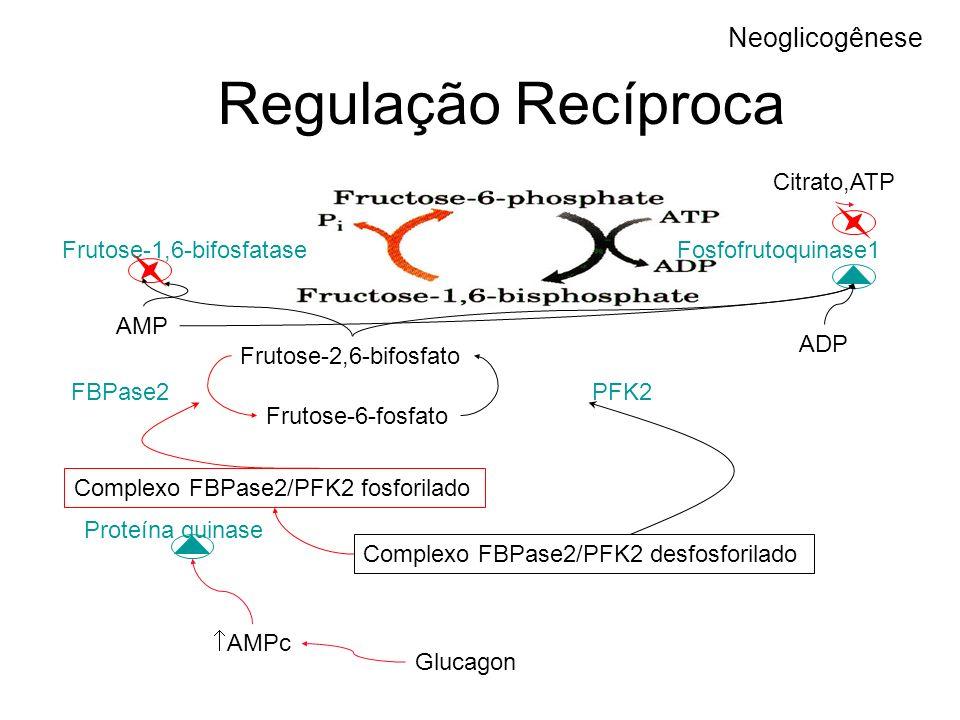 Regulação Recíproca Neoglicogênese Fosfofrutoquinase1Frutose-1,6-bifosfatase AMP ADP Citrato,ATP Frutose-2,6-bifosfato Frutose-6-fosfato PFK2FBPase2 C