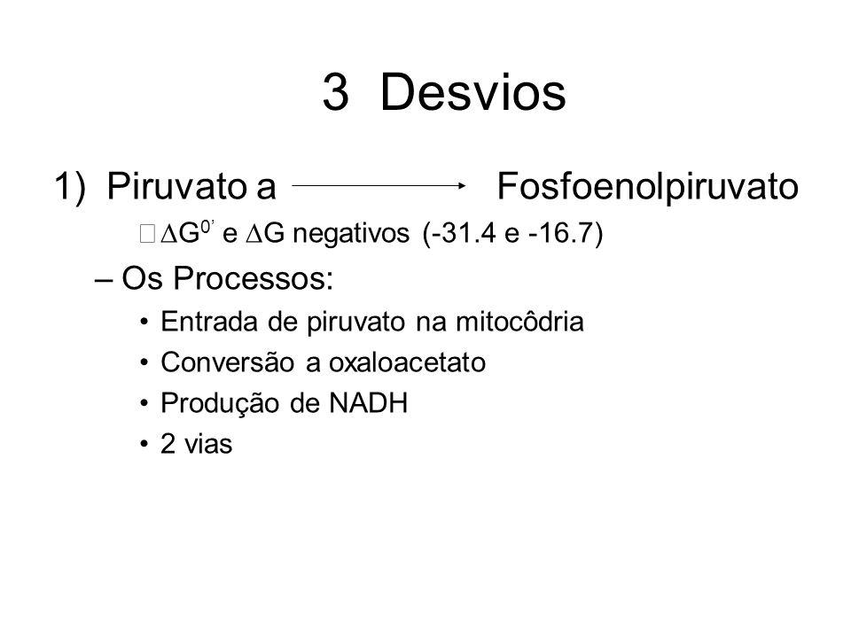3 Desvios 1) Piruvato a Fosfoenolpiruvato G 0 e G negativos (-31.4 e -16.7) –Os Processos: Entrada de piruvato na mitocôdria Conversão a oxaloacetato