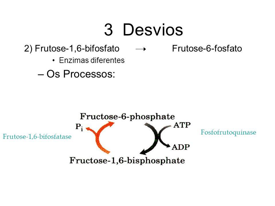 3 Desvios 2) Frutose-1,6-bifosfato Frutose-6-fosfato Enzimas diferentes –Os Processos: Fosfofrutoquinase Frutose-1,6-bifosfatase