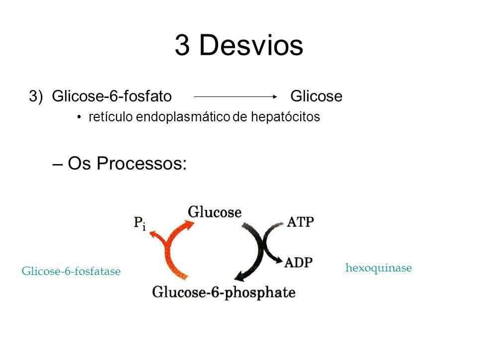 3 Desvios 3) Glicose-6-fosfato Glicose retículo endoplasmático de hepatócitos –Os Processos: Glicose-6-fosfatase hexoquinase