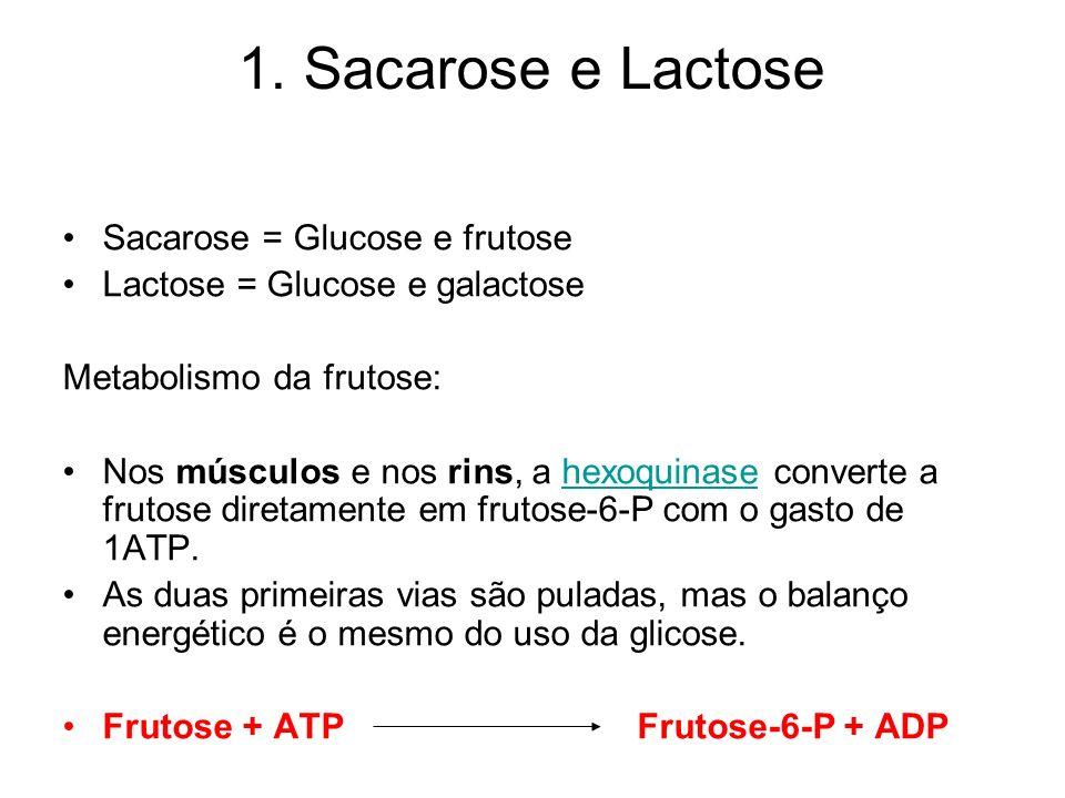 1. Sacarose e Lactose Sacarose = Glucose e frutose Lactose = Glucose e galactose Metabolismo da frutose: Nos músculos e nos rins, a hexoquinase conver