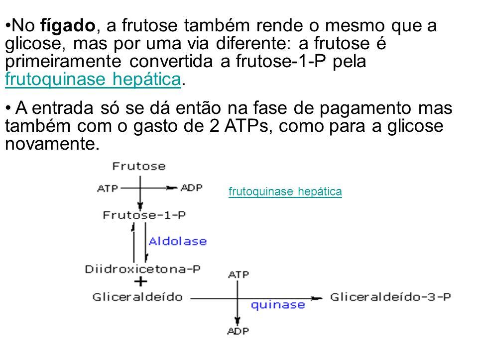 No fígado, a frutose também rende o mesmo que a glicose, mas por uma via diferente: a frutose é primeiramente convertida a frutose-1-P pela frutoquina
