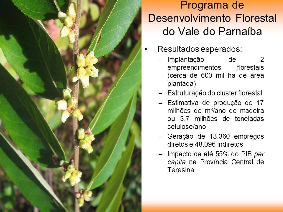 Programa de Desenvolvimento Florestal do Vale do Parnaíba Resultados esperados: –Implantação de 2 empreendimentos florestais (cerca de 600 mil ha de área plantada) –Estruturação do cluster florestal –Estimativa de produção de 17 milhões de m 3 /ano de madeira ou 3,7 milhões de toneladas celulose/ano –Geração de 13.360 empregos diretos e 48.096 indiretos –Impacto de até 55% do PIB per capita na Província Central de Teresina.