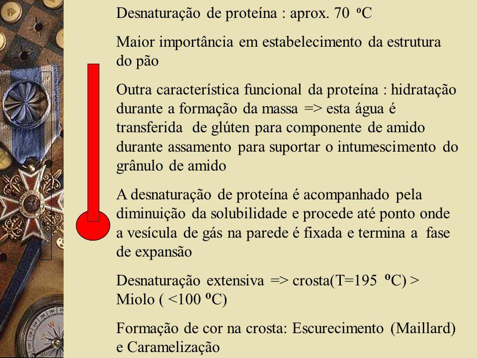 Desnaturação de proteína : aprox. 70 o C Maior importância em estabelecimento da estrutura do pão Outra característica funcional da proteína : hidrata