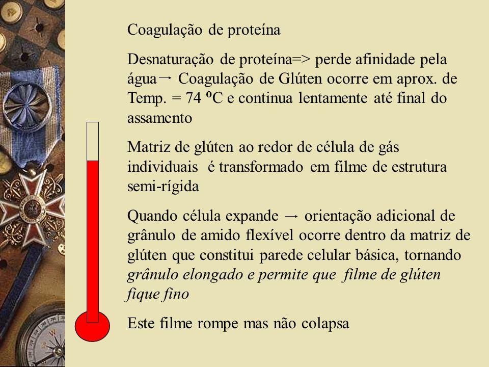 Coagulação de proteína Desnaturação de proteína=> perde afinidade pela água Coagulação de Glúten ocorre em aprox. de Temp. = 74 o C e continua lentame