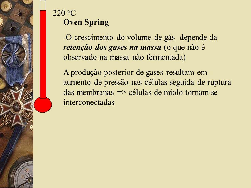 220 o C Oven Spring -O crescimento do volume de gás depende da retenção dos gases na massa (o que não é observado na massa não fermentada) A produção posterior de gases resultam em aumento de pressão nas células seguida de ruptura das membranas => células de miolo tornam-se interconectadas