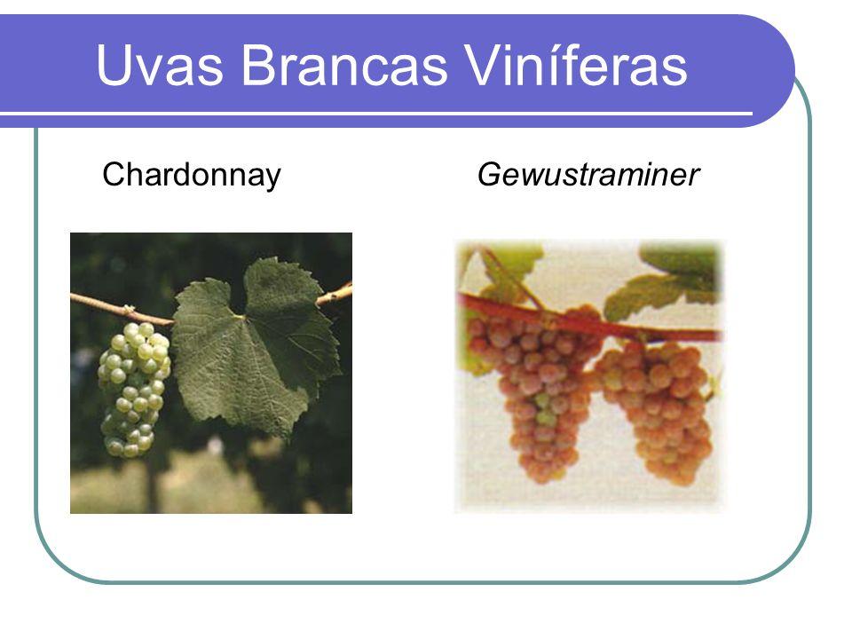Uvas Brancas Viníferas Chardonnay Gewustraminer