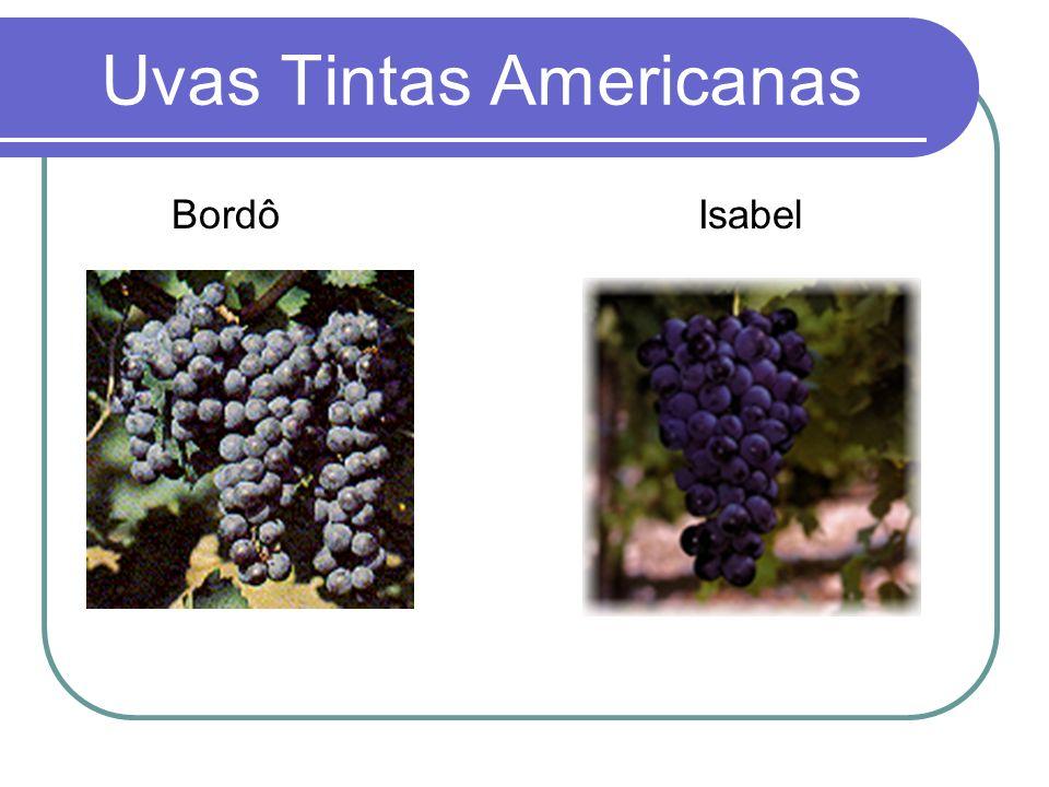 Uvas Tintas Americanas Bordô Isabel
