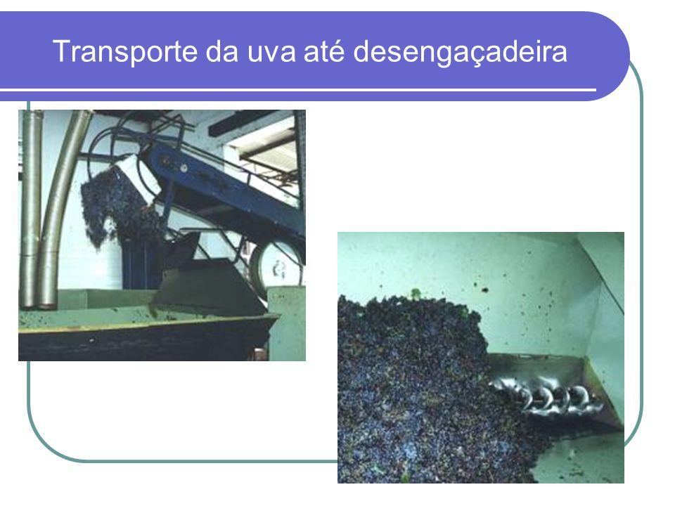 Transporte da uva até desengaçadeira