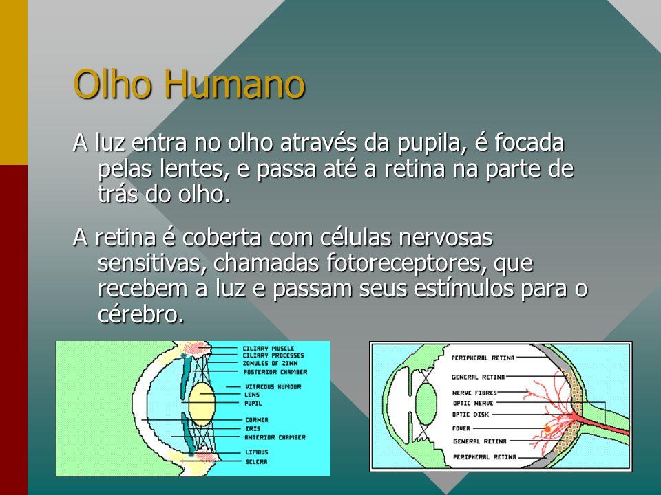 Olho Humano Os fotoreceptores são divididos em rodes e cones.Os fotoreceptores são divididos em rodes e cones.