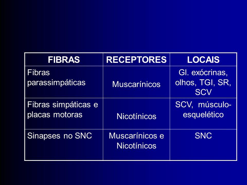 FIBRASRECEPTORESLOCAIS Fibras parassimpáticas Muscarínicos Gl. exócrinas, olhos, TGI, SR, SCV Fibras simpáticas e placas motoras Nicotínicos SCV, músc