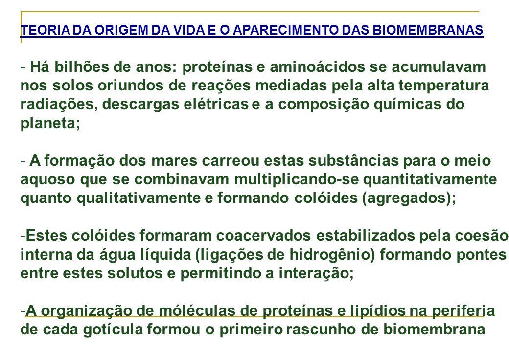 REFERENCIAS BIBLIOGRÁFICAS 1)Lehninger (2006) Princípios da Bioquímica, 4° ed., Editora Sarvier 2)Alberts et al.