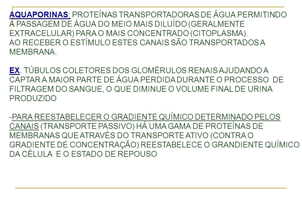 AQUAPORINAS: PROTEÍNAS TRANSPORTADORAS DE ÁGUA PERMITINDO A PASSAGEM DE ÁGUA DO MEIO MAIS DILUÍDO (GERALMENTE EXTRACELULAR) PARA O MAIS CONCENTRADO (C