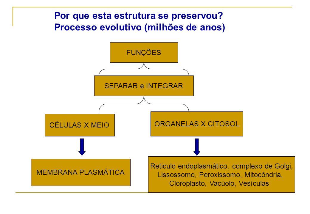 Por que esta estrutura se preservou? Processo evolutivo (milhões de anos) FUNÇÕES SEPARAR e INTEGRAR CÉLULAS X MEIO ORGANELAS X CITOSOL MEMBRANA PLASM